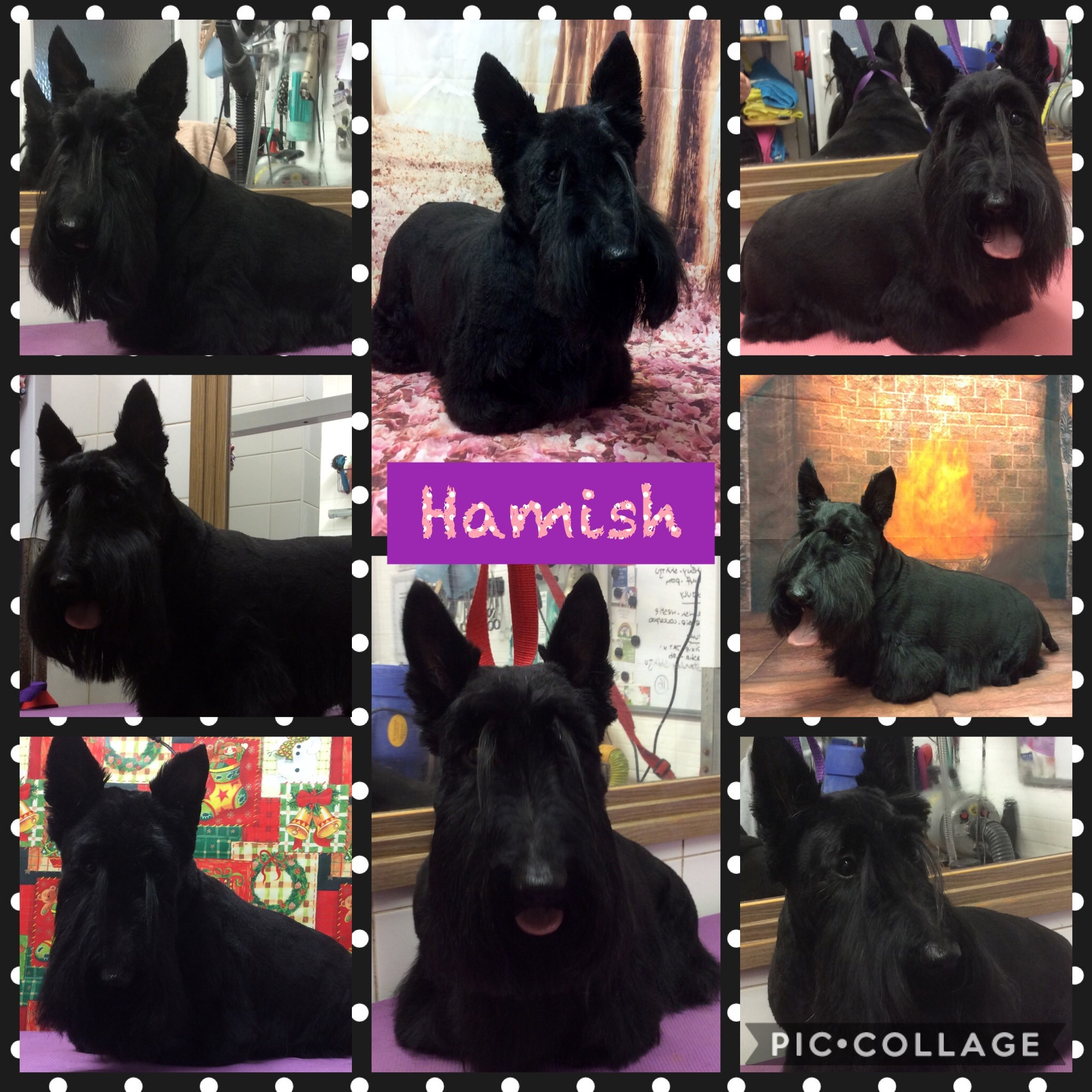 Hamish Collage
